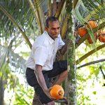 Kokosnuss Lanka Hope